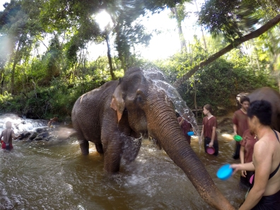 The Karen Elephant Experience at Elephant Nature Park, Chiang Mai