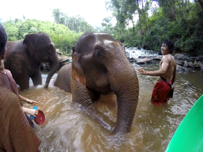 Bath Time, The Karen Elephant Experience at Elephant Nature Park, Chiang Mai
