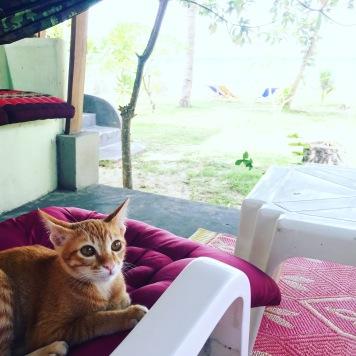My Bovy Kitten