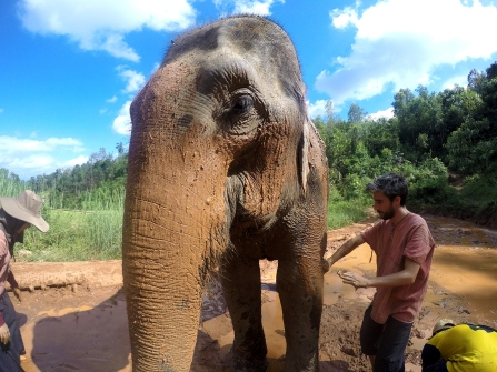 Muddy Massage, The Karen Elephant Experience at Elephant Nature Park, Chiang Mai